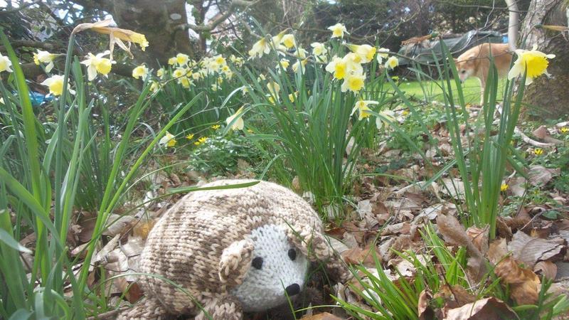 Nouveau h risson dans le jardin for Herisson dans mon jardin