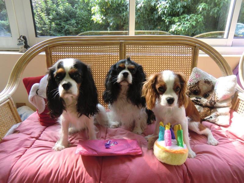 joyeux anniversaire chien qui chante