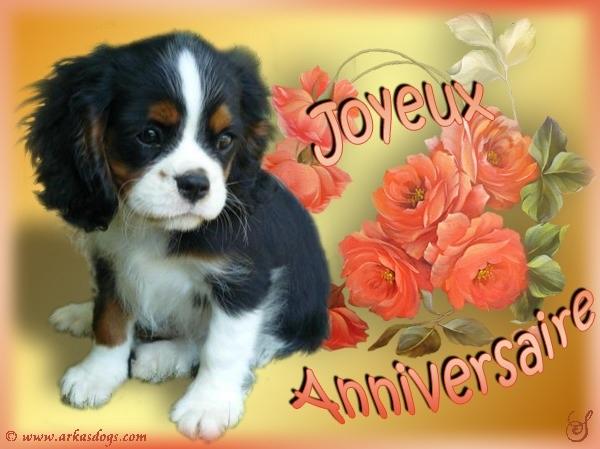 carte anniversaire chien cavalier king charles