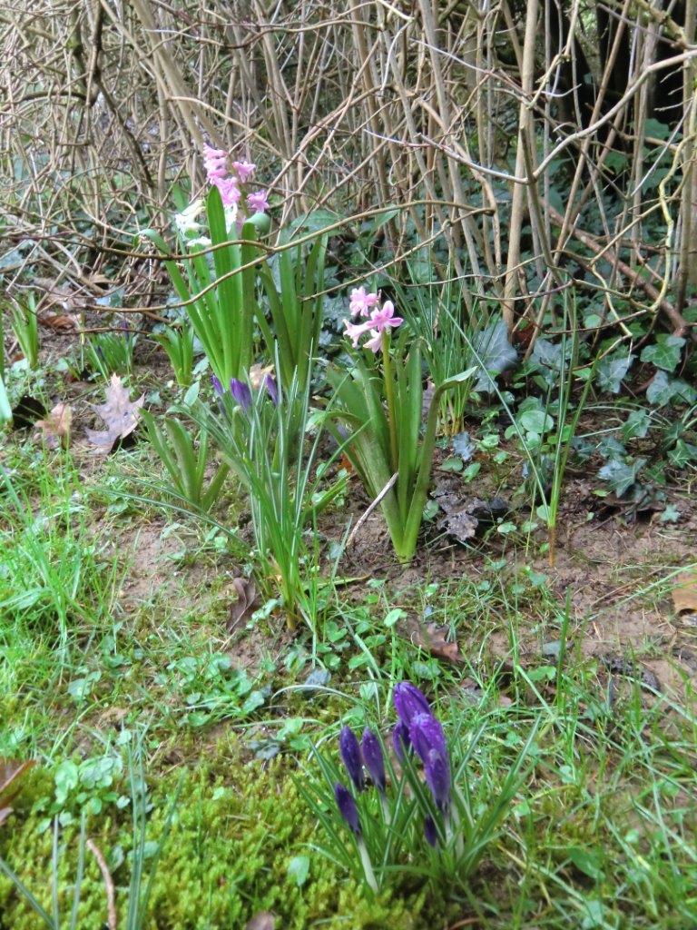 Jolies fleurs de printemps au jardin for Fleurs jardin printemps